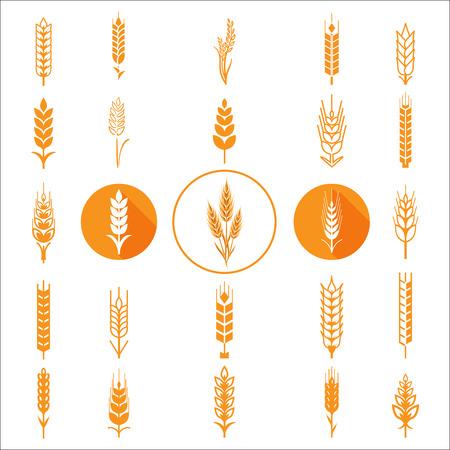Oídos del trigo iconos y logotipos establecidos. Para el estilo de Identidad Natural Product Company y la empresa agrícola. trigo orgánico, la agricultura pan y líneas eat.Contour naturales. Diseño plano. Elementos de diseño. iconos de círculo. Imagen realista.