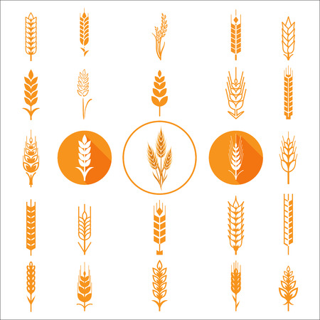 Wheat Ears Icons and Logo Set. For Identity Style of Natural Product Company and Farm Company. Organic wheat, bread agriculture and natural eat.Contour lines. Flat design. Design elements. Circle icons. Realistic image.