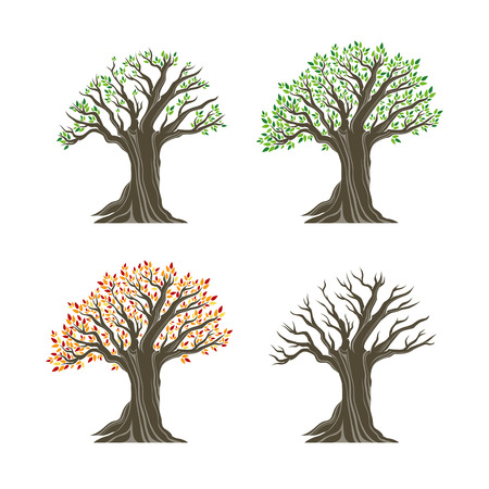 Trees in four seasons realistic decorative icons set isolated on white background. Design elements. Realistic image.