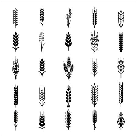 Oídos del trigo iconos y logotipos establecidos. Para el estilo de Identidad Natural Product Company y la empresa agrícola. trigo orgánico, la agricultura pan y natural comen. Lineas de contorno. Diseño plano. Elementos de diseño. Imagen realista.