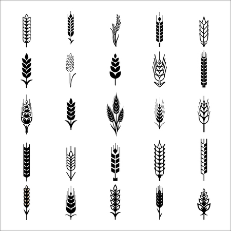 Wheat Ears Icons and Logo Set. For Identity Style of Natural Product Company and Farm Company. Organic wheat, bread agriculture and natural eat.Contour lines. Flat design. Design elements. Realistic image. Vettoriali