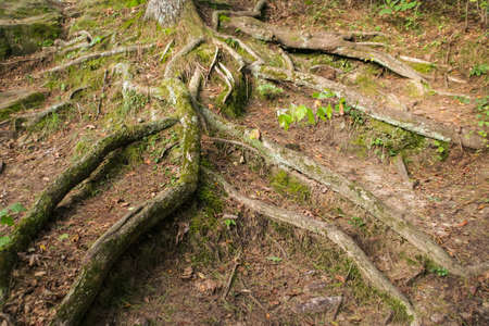 Picture of some really neat tree roots i came across while hiking in southern Wisconsin. Imagens