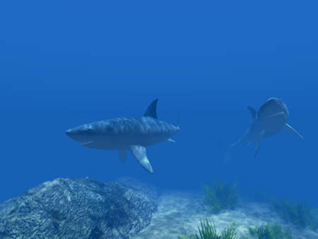 Two sharks under water on a background of the blur foreground photo