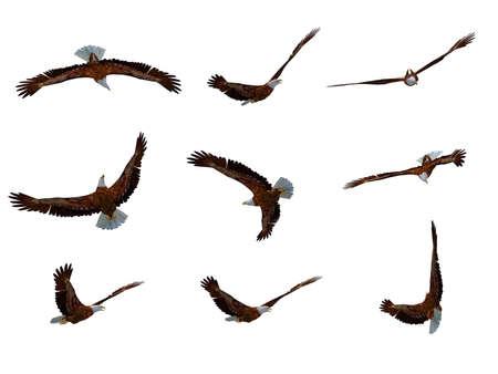 adler silhouette: Adler im Flug  Lizenzfreie Bilder