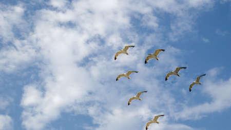 Flight seagull in the dark blue sky. Pacific ocean