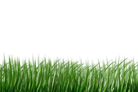 simulation grass (sketch grass) Stock Photo - 1745936