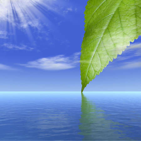 cleanness: Reflection of a leaf of a tree behind clouds in water