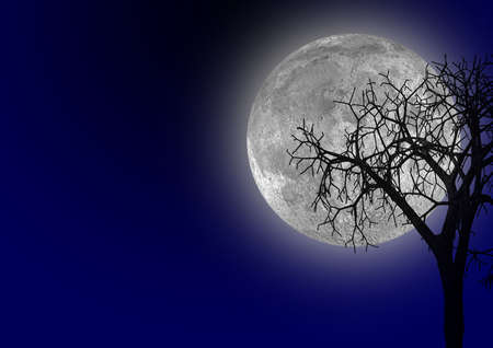 hopeless: The full bright moon. A dry tree on a background of light of the moon