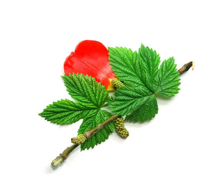 Branches of a hazel grove with buds, relief leaves and a red petal photo