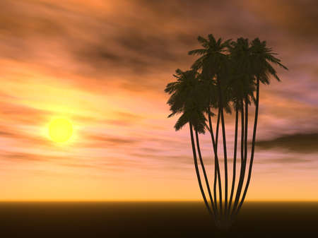 monophonic: Scarlet decline and palm trees (a monophonic bottom part of a photo)