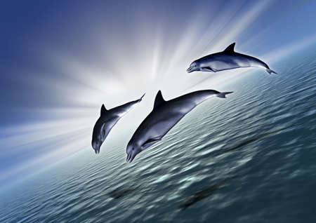 Three dolphin in very bright  sunrise (ocean) - In a diagonal arrangement of the cadre photo