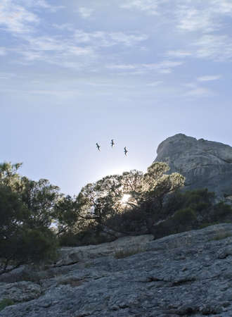 Three seagulls on a background of a dawn because of a tree and picturesque rocks photo