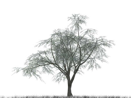 dingbat: Tree with green leaves isolated on a white background
