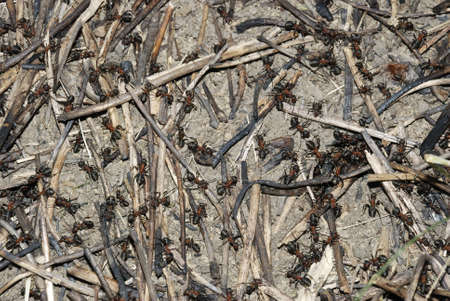 pismire: Ant hill (it is photographed close up in second half of day)