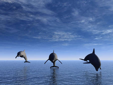 Three dolphins floating at ocean (view in front)