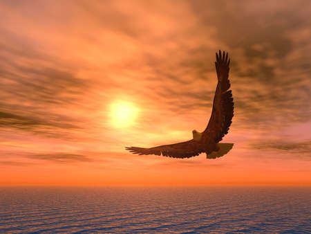 flying eagle: Eagle on a background of the coming sun.  Stock Photo