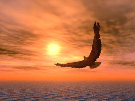 aguila volando: �guila sobre un fondo de la llegada del sol.