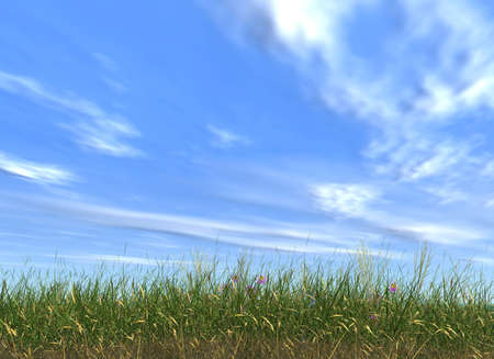 pasturage: Grass on a background of clouds and the blue sky with fine fragments of flowers  Stock Photo