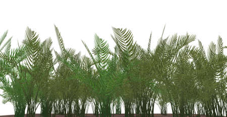 Fern grass isolated on a white background. Stock Photo - 1755548