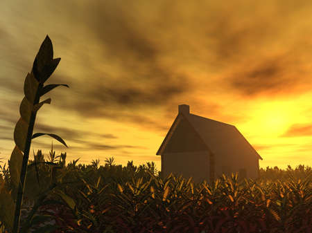 The lonely house in thrickets of a rich grass on a background of a sunset (a red drama sunset) photo