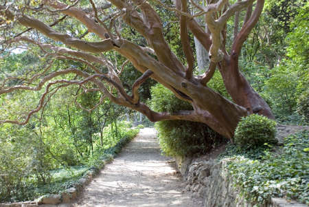 branchy: Path in park passing under an effective branchy tree Stock Photo