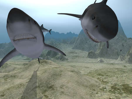 Sharks in water (three sharks in various poses) Stock Photo - 1755560