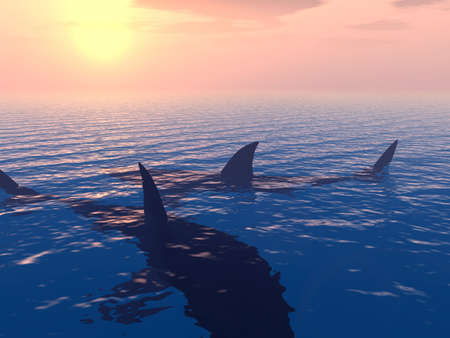 peril: Two sharks in searches of a victim on a background of the coming sun, near coast ���������