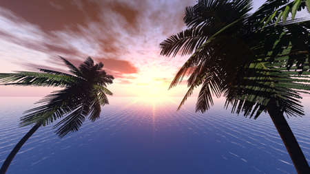 Sunset on a background of branches of palm trees and the effective sky. The yellow sun with very beautiful reflection at ocean. Objective 8mm photo