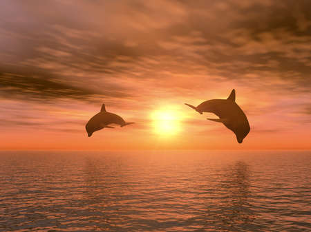 two dolphins floating at ocean (realistic red sunset) Stock Photo