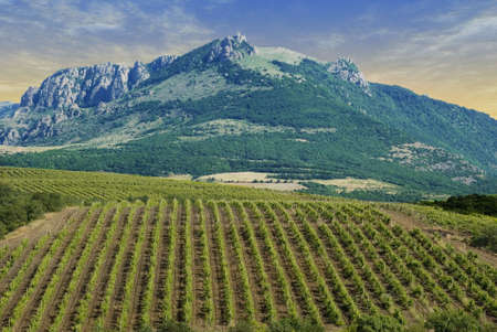 origins: Vineyards at bottom of mountain (the Crimean valley)