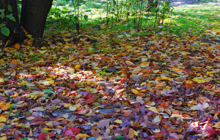 etude: Autumn forest. An etude of an autumn leaf fall in forest. Stock Photo