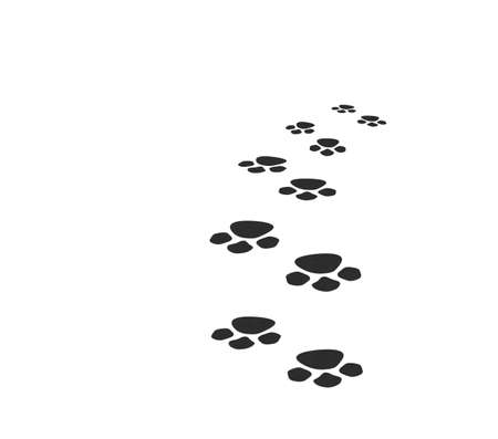 dog pose: Traces of an animal leaving in a distance. It is isolated on a white background Stock Photo