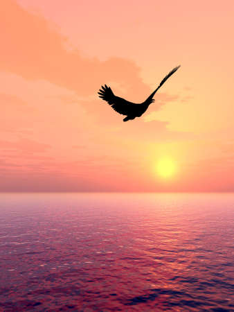 Eagle above oceans in beams red  sunset photo