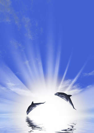 marinelife: Three dolphins floating at ocean (control light)