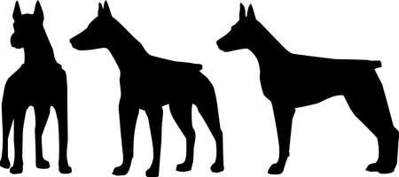 doberman: Hund. Der Dobermann Terrier - eine Silhouette in verschiedenen Posen