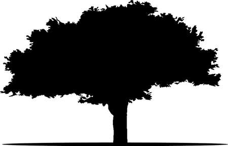 Tree. The isolated silhouette of a tree with leaves. Vector