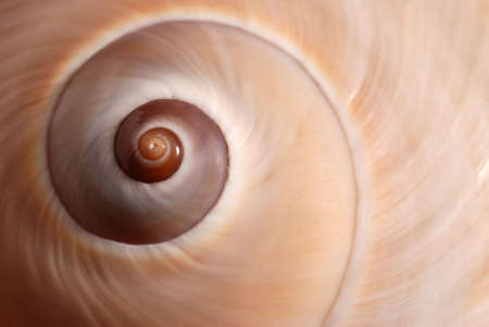 Cockleshell. A structure of a sea cockleshell, a photo close up photo