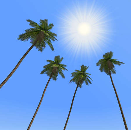 Palm trees and the sun. Palm trees the bottom view the bright sun on a background of the pure sky photo