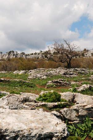 Vegetation in rocks. Wild district in the Crimean reserve Stock Photo - 3020632
