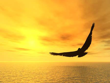adler silhouette: Eagle und einem gelben R�ckgang. A Soaring Eagle oben Ozean