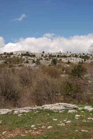 Vegetation in rocks. Wild district in the Crimean reserve Stock Photo - 3065358