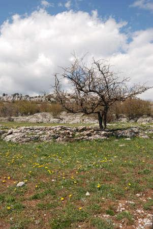 Vegetation in rocks. Wild district in the Crimean reserve  photo