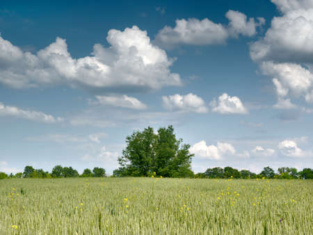 tree and field. A landscape about vegetation and the beautiful sky Stock Photo - 3142694