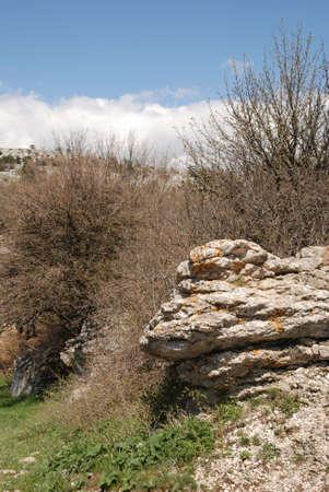 Vegetation in rocks. Wild district in the Crimean reserve Stock Photo - 3142713