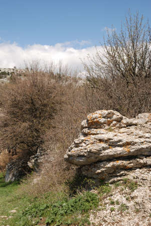 Vegetation in rocks. Wild district in the Crimean reserve Stock Photo - 3142713