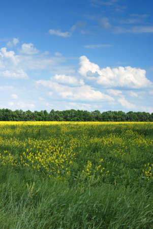 Field. A landscape about vegetation and the beautiful sky Stock Photo - 3220449