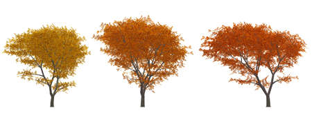 Autumn tree. A set of illustrations - trees with yellow leaf illustration