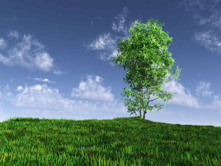 Birch. A tree on a field, the effective sky. 3d rendering photo