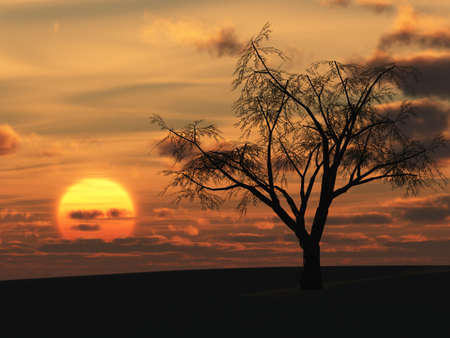 dry tree and red sunset. Lonely tree without foliage in desert Stock Photo - 3411891
