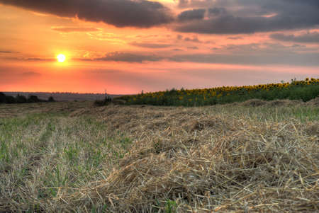 Field with hay. The oblique grass on a background sunset Stock Photo - 3440549